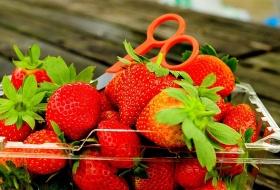 愛戀草莓族‧甜蜜上雲端